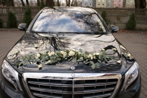 eukaliptus dekoracja auta